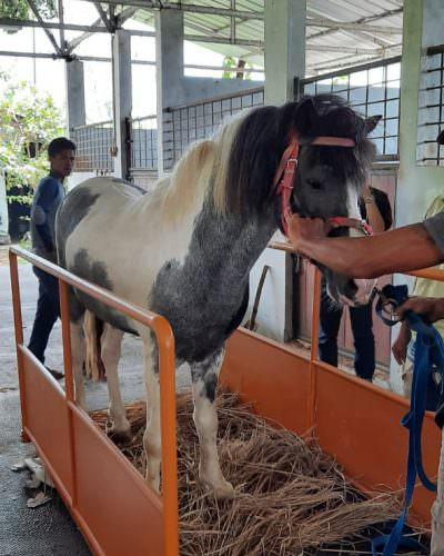 Timbangan Kuda Digital X-SAGo